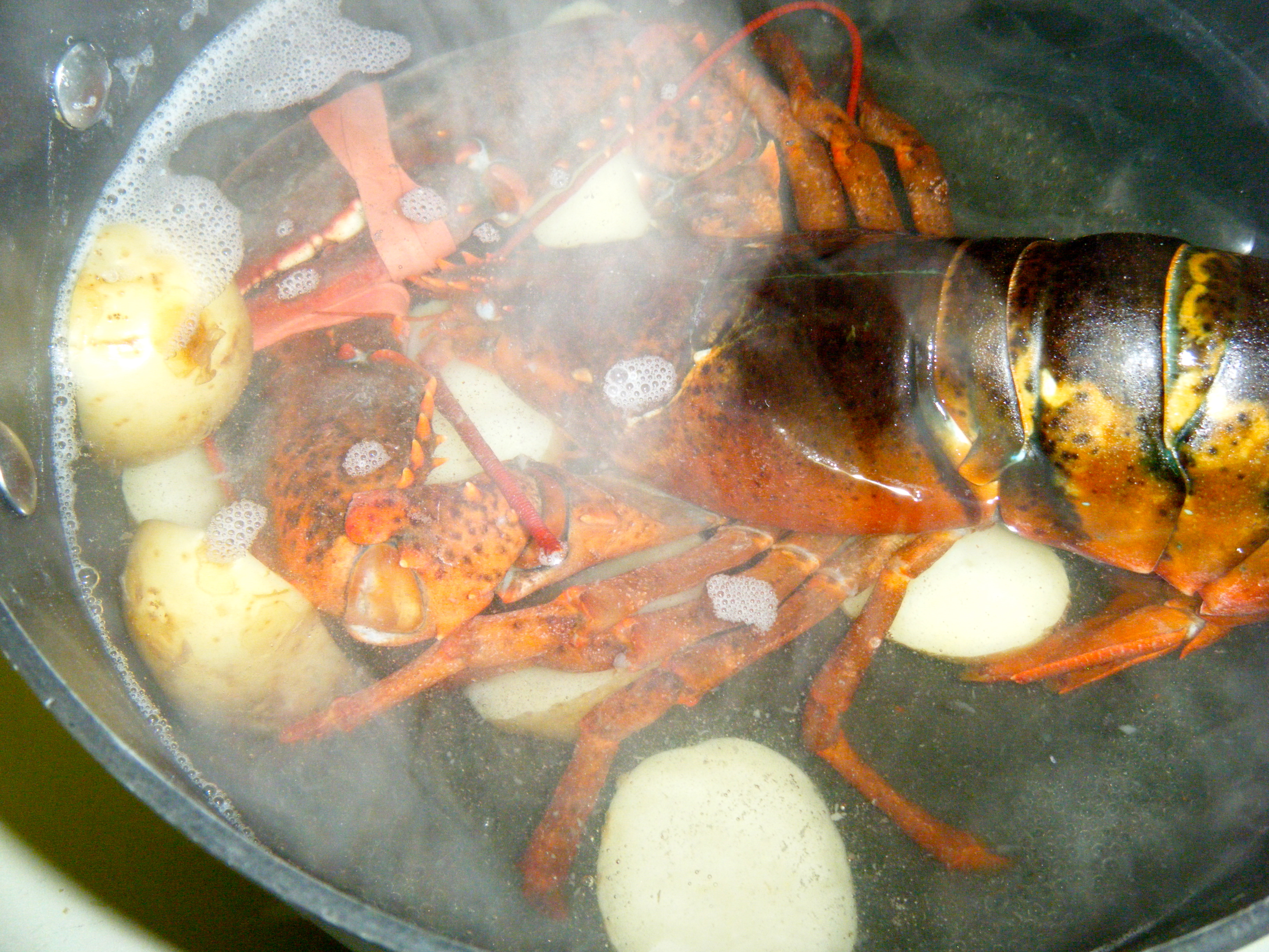 lobster going into the pot